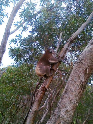 koala-sthn-xpressway-F