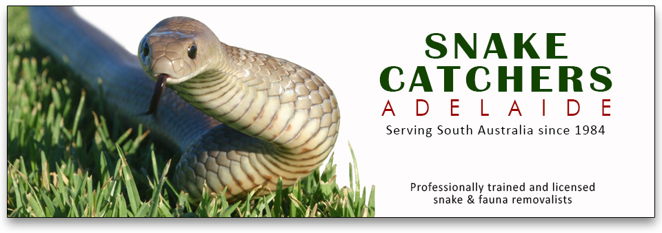 SNAKE CATCHERS ADELAIDE
