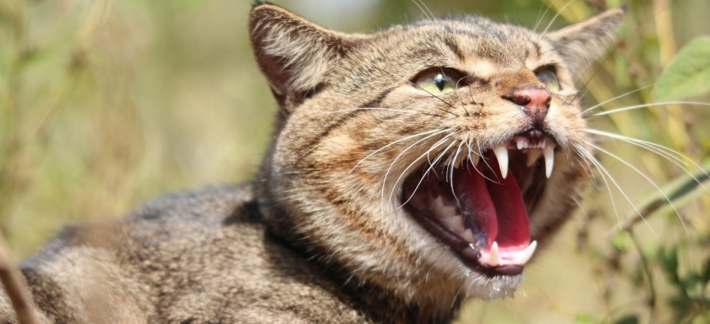 Andrew-Cooke-Feral-cat-1260x576