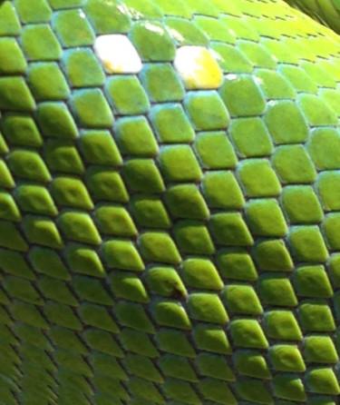 snake-aaaaway-bbq-008